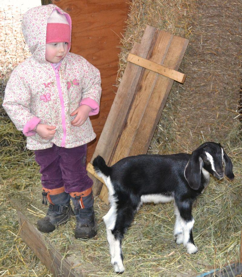 April 2011 - goats 28a