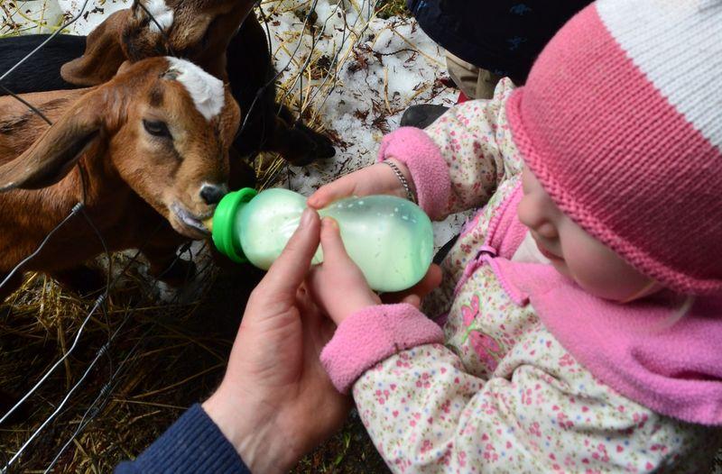 April 2011 - goats 15a