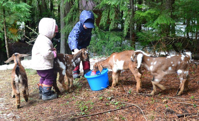 April 2011 - goats 24a