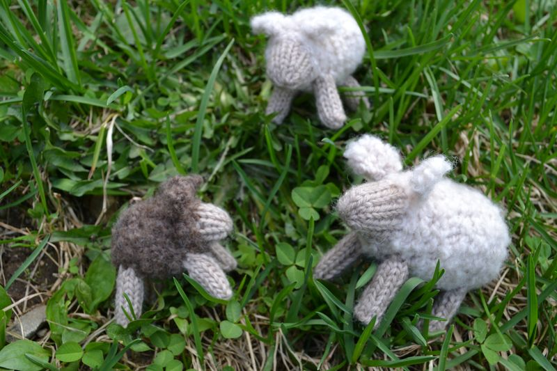 Knitted Farmyard - May 2011 - sheep 3