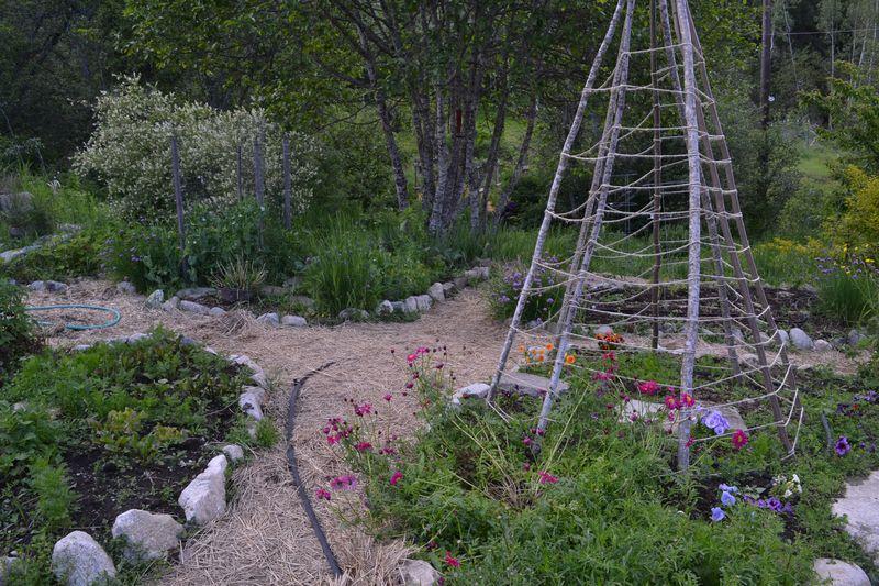 June 17, 2012 - my garden
