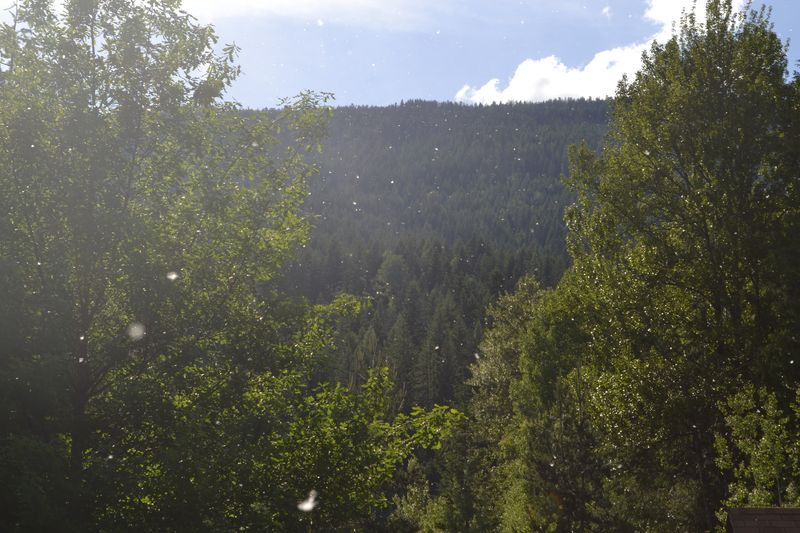 June 30, 2012 - pollen 2