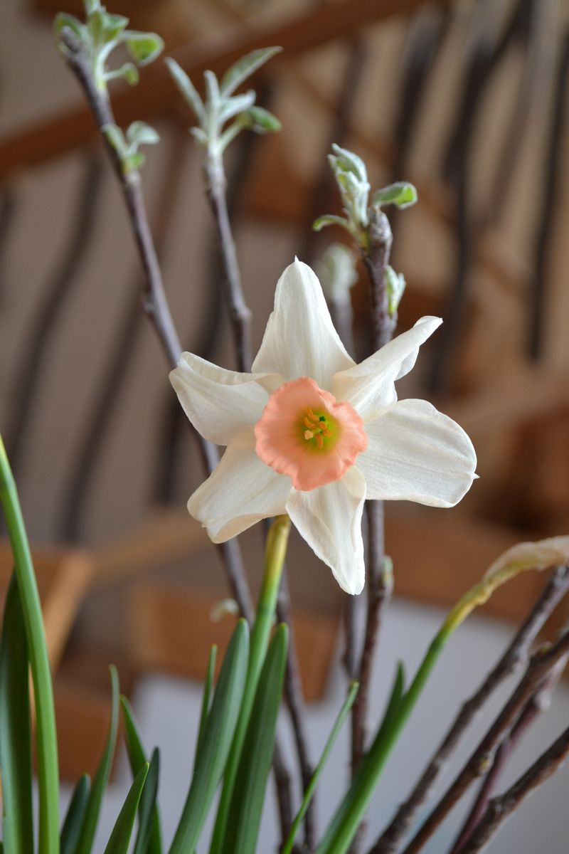 March 2012 - daffodil