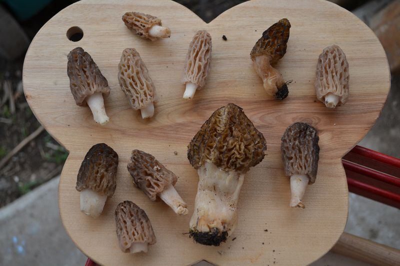 May 2, 2012 - first morels