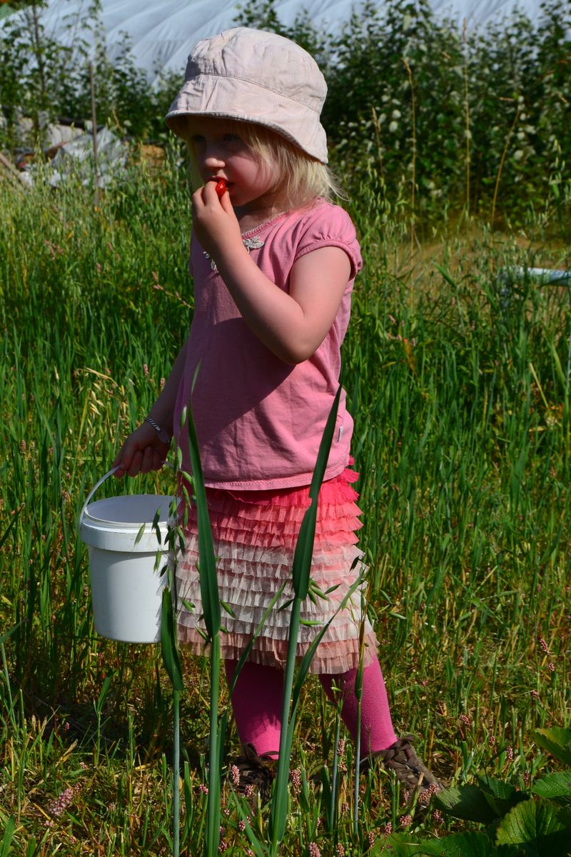 August 2012 - strawberry picking 2