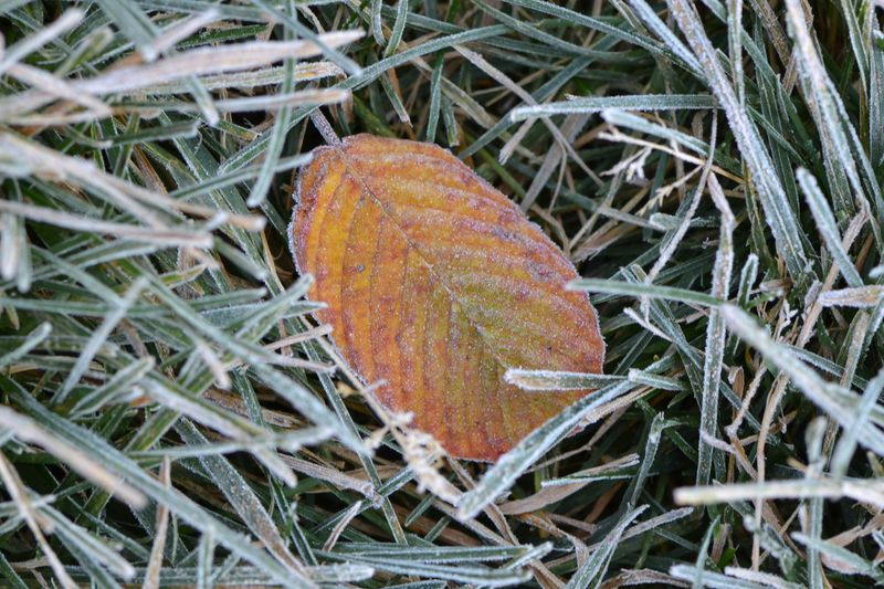 October 3, 2012 - first frost 2