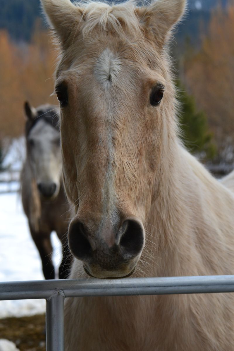 February 2013 - neighbour's horses 2