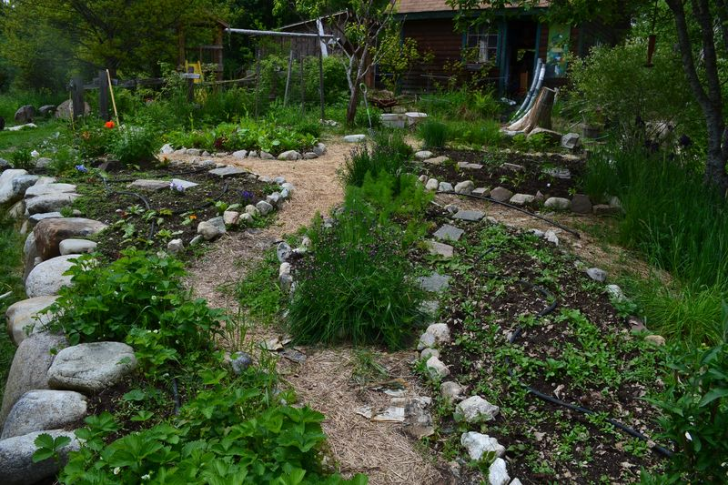 June 2, 2013 - kitchen garden 1