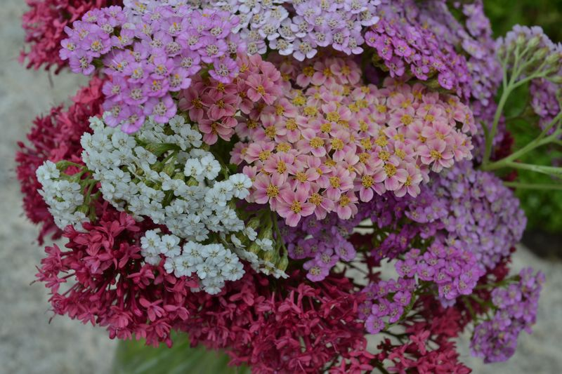 July 2013 - Summer's 5 Birthday - 1 - yarrow bouquet