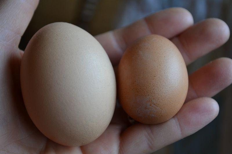 November 2013 - first egg 3