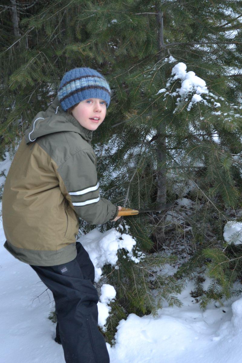 December 2013 - tree 9
