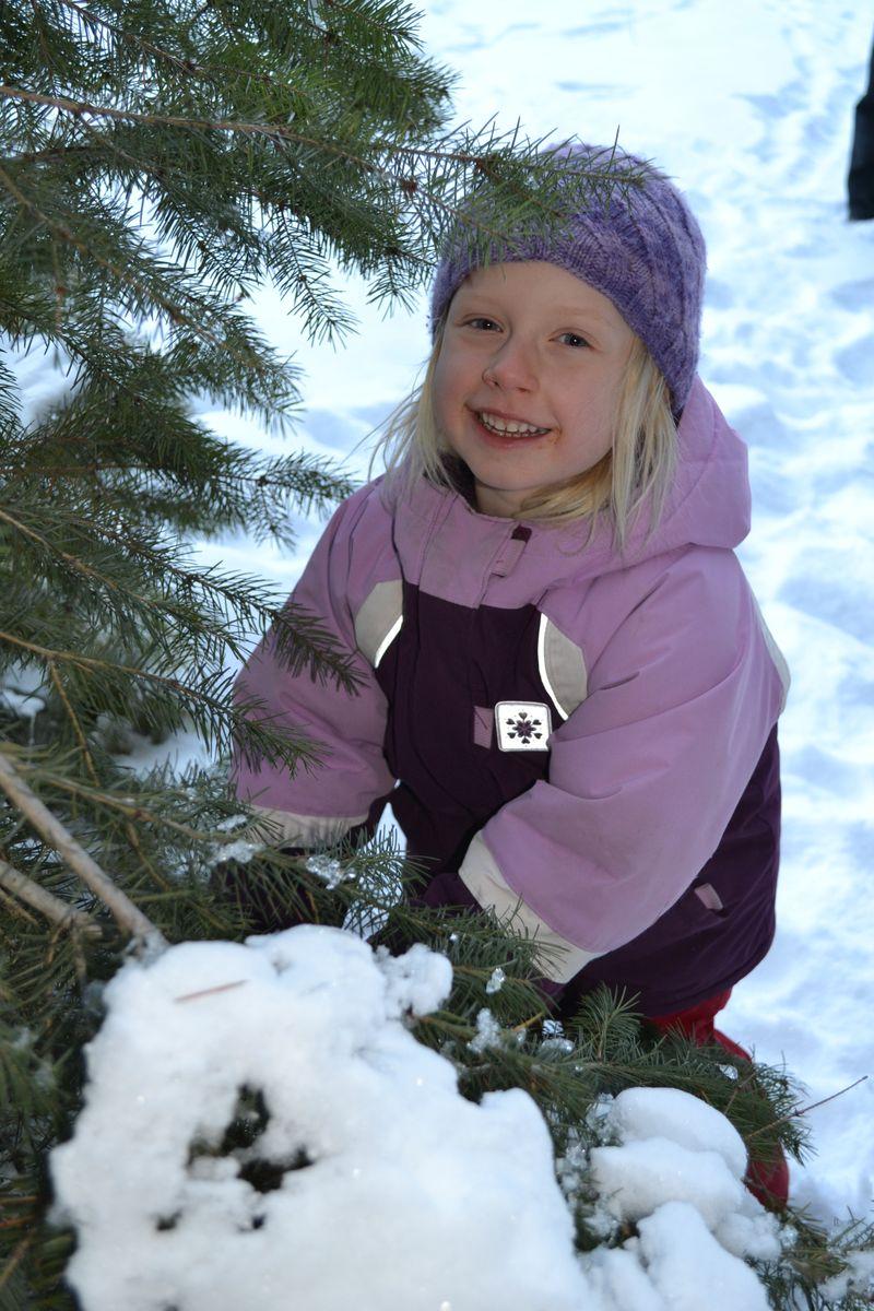 December 2013 - tree 10
