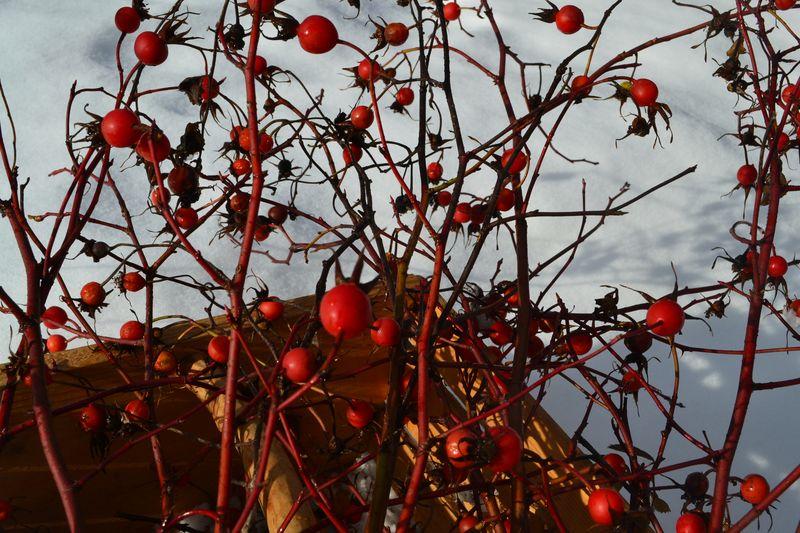 November 2011 - rosehips 2