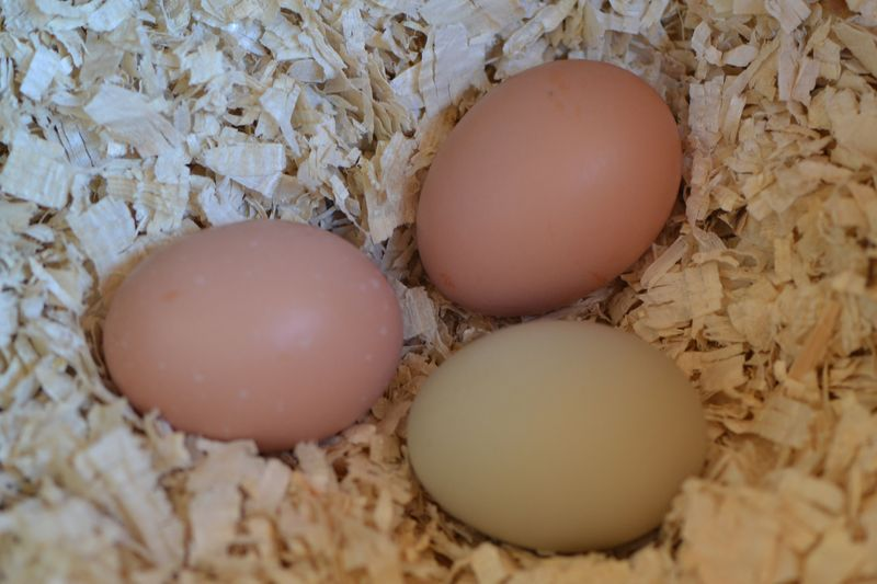 February 2014 - eggs
