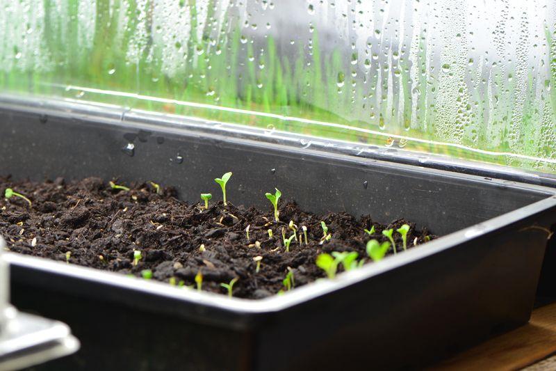February 2014 - lettuce 4