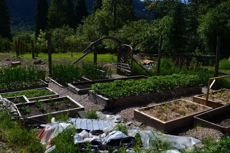 June 11, 2014 - Big Garden