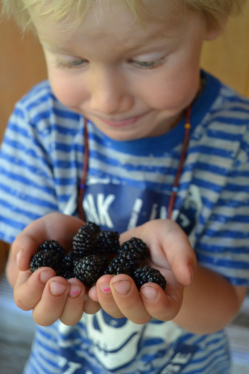 August 7, 2014 - blackberries 2