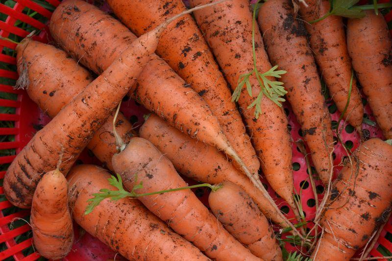 July 23, 2014 - carrots