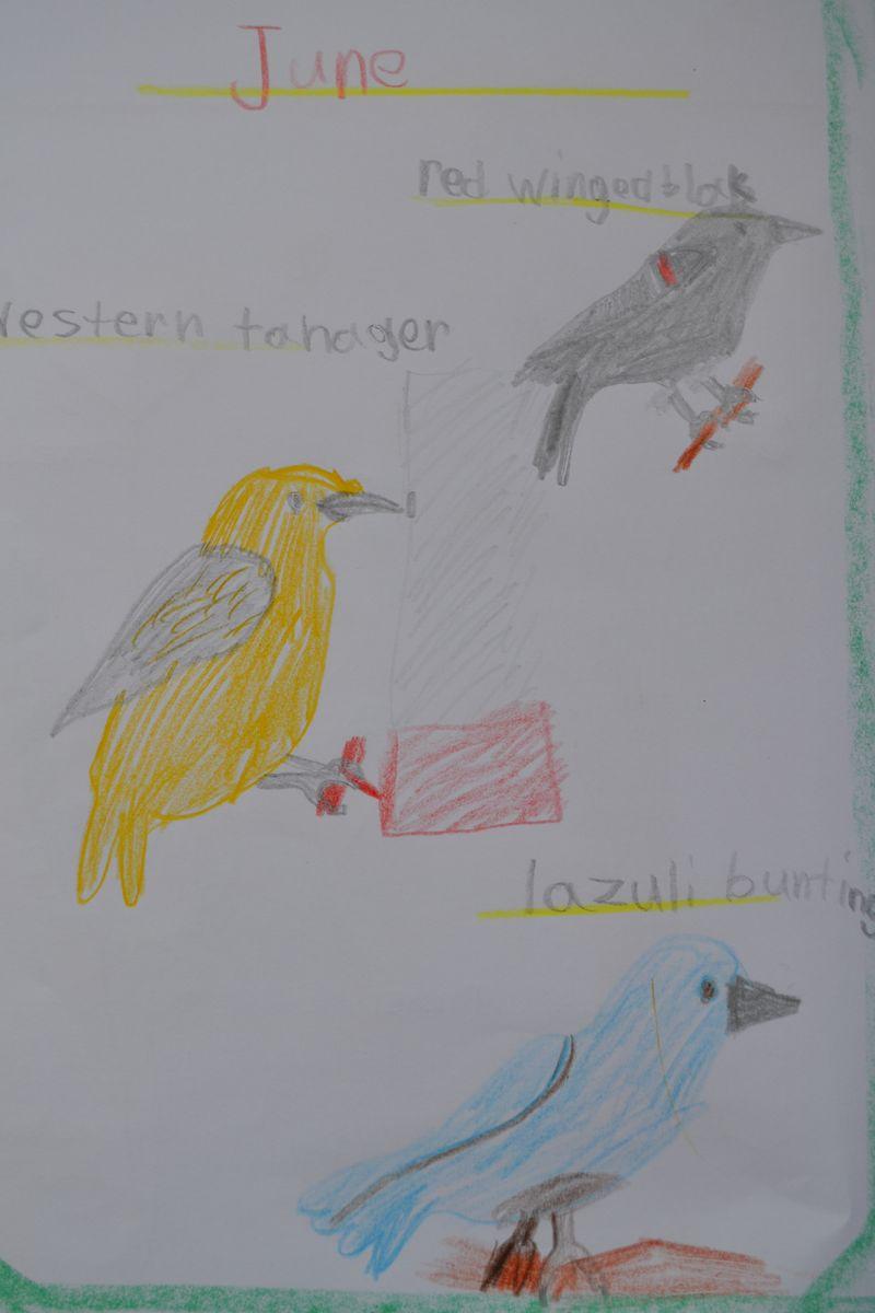 August 2014 - Leif's bird guide