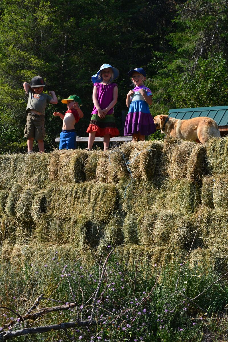 August 2014 - hay time 5