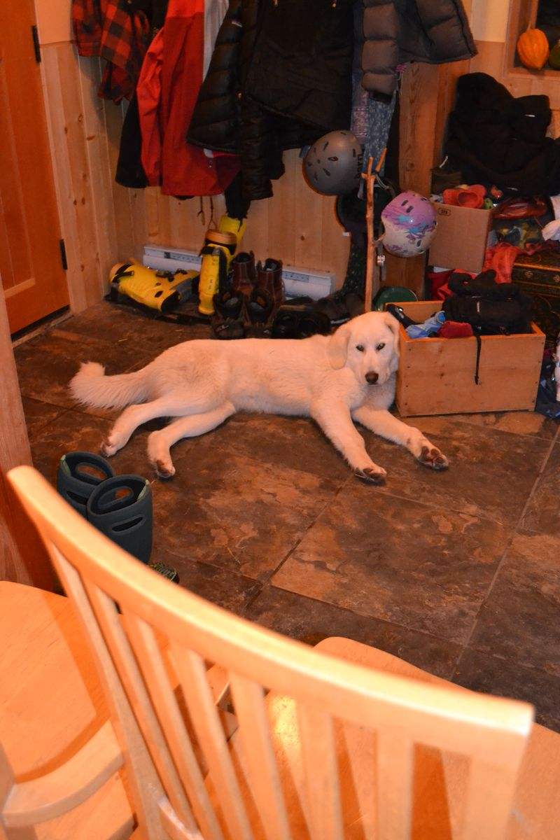 January 2015 - Clover in the house