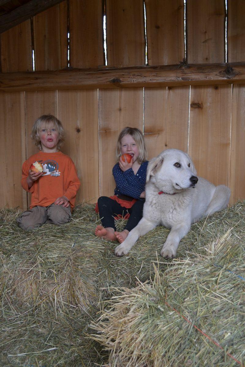 March 2015 - hay barn fun 2