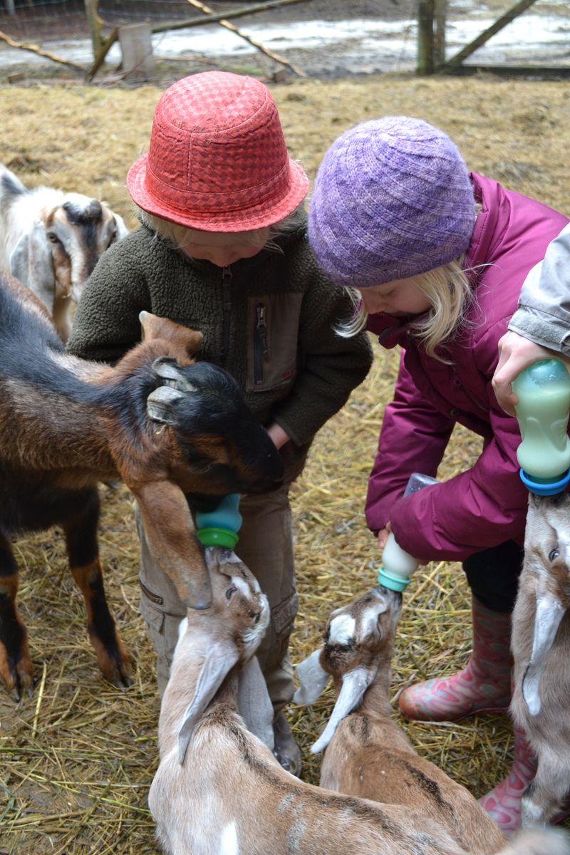 March 2015 - gimli farm 2
