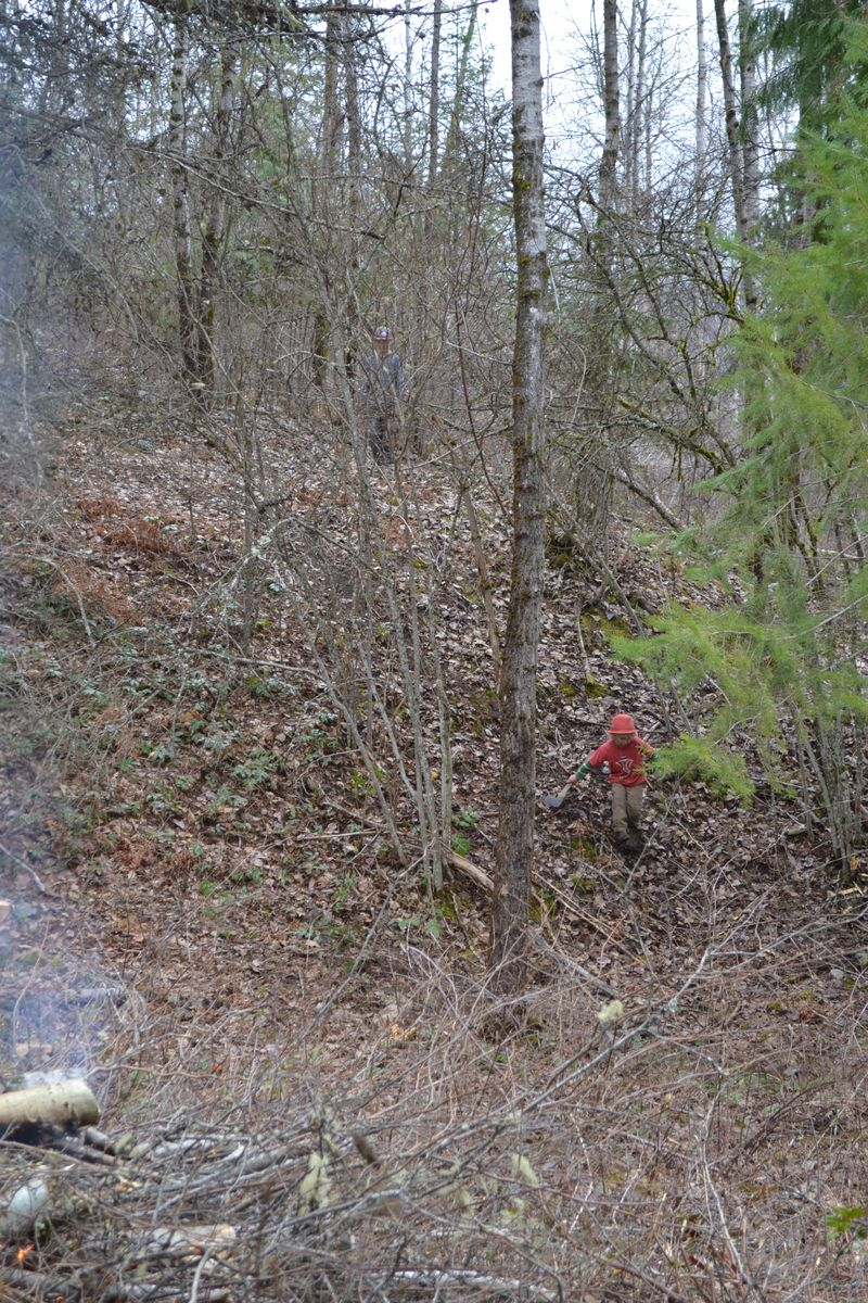 March 2015 - clearing goat pasture 1
