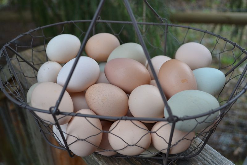 March 2015 - eggs