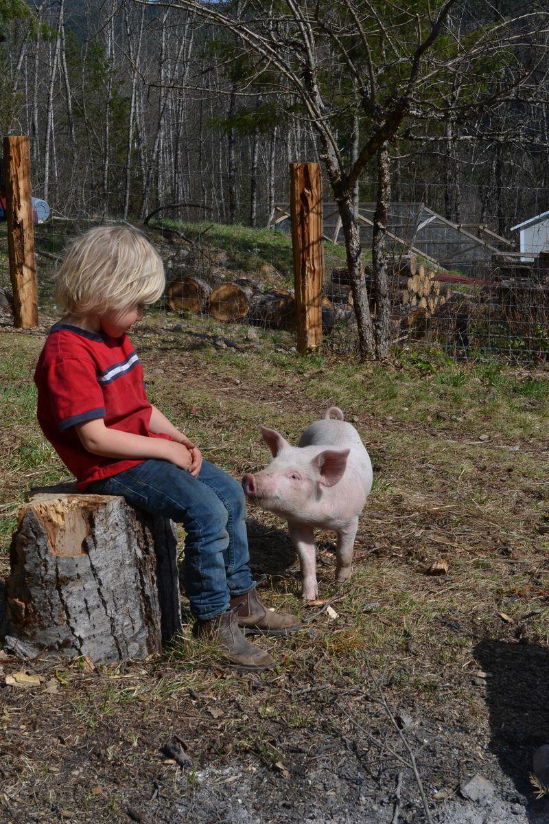 April 2015 - pigs 8 wks 8