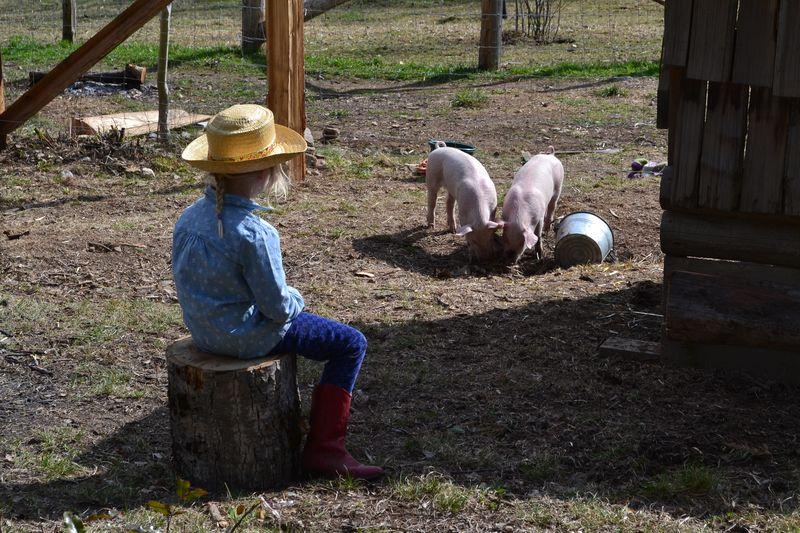 April 2015 - pigs 8 wks 14
