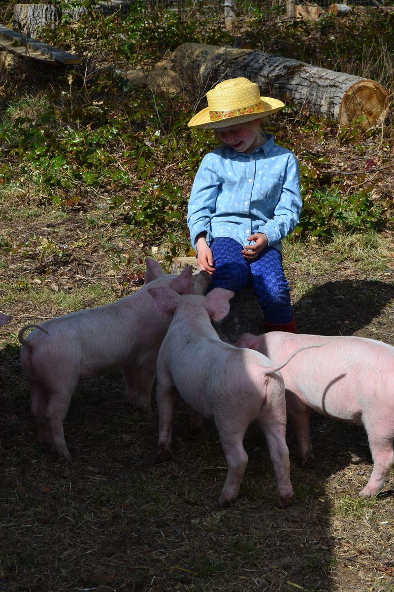 April 2015 - pigs 8 wks 11