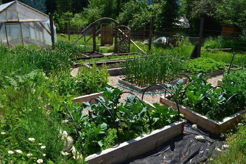 June 16, 2015 - big garden 1