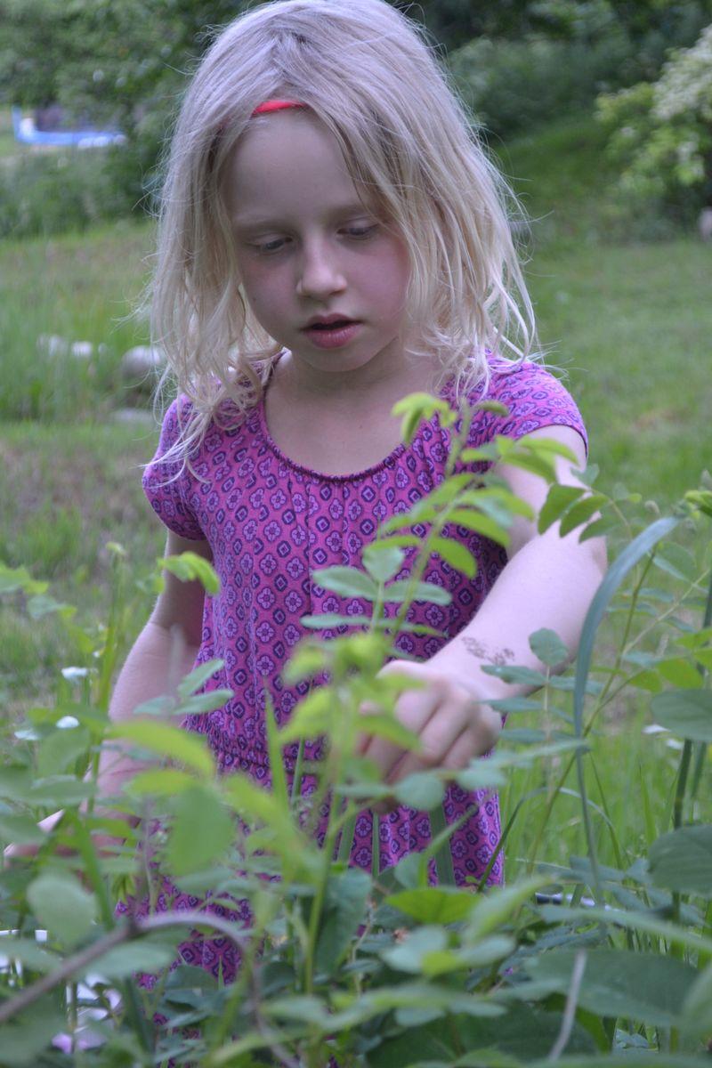 June 2015 - rosebud 2