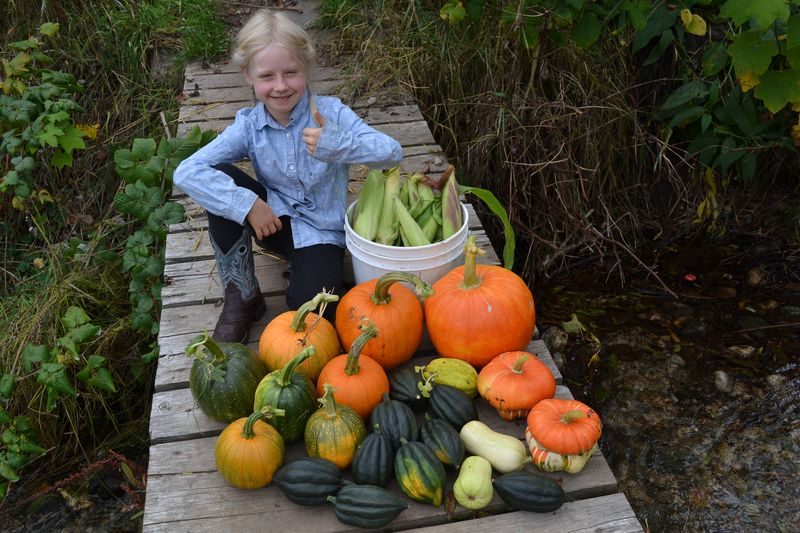 September 24, 2015 - three sister's harvest 2