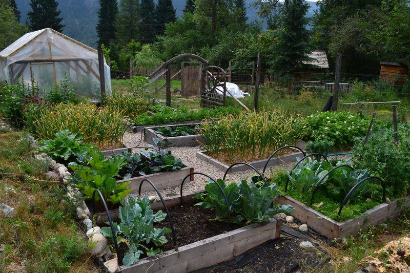 July 11, 2015 - Big Garden 6