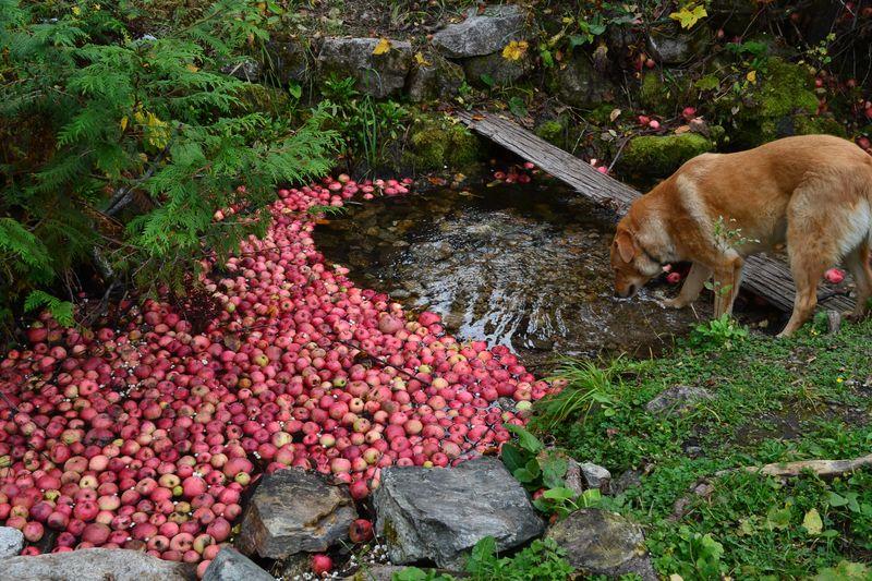 October 2015 - apple creek