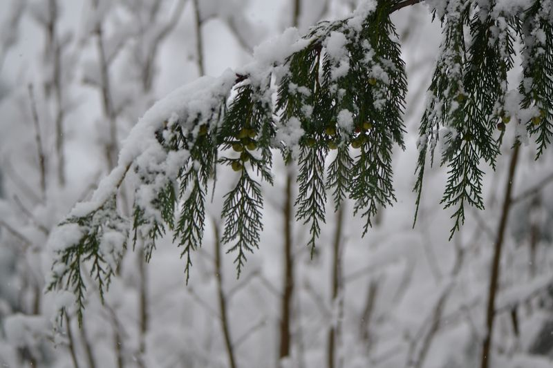 November 2015 - first snowfall 10