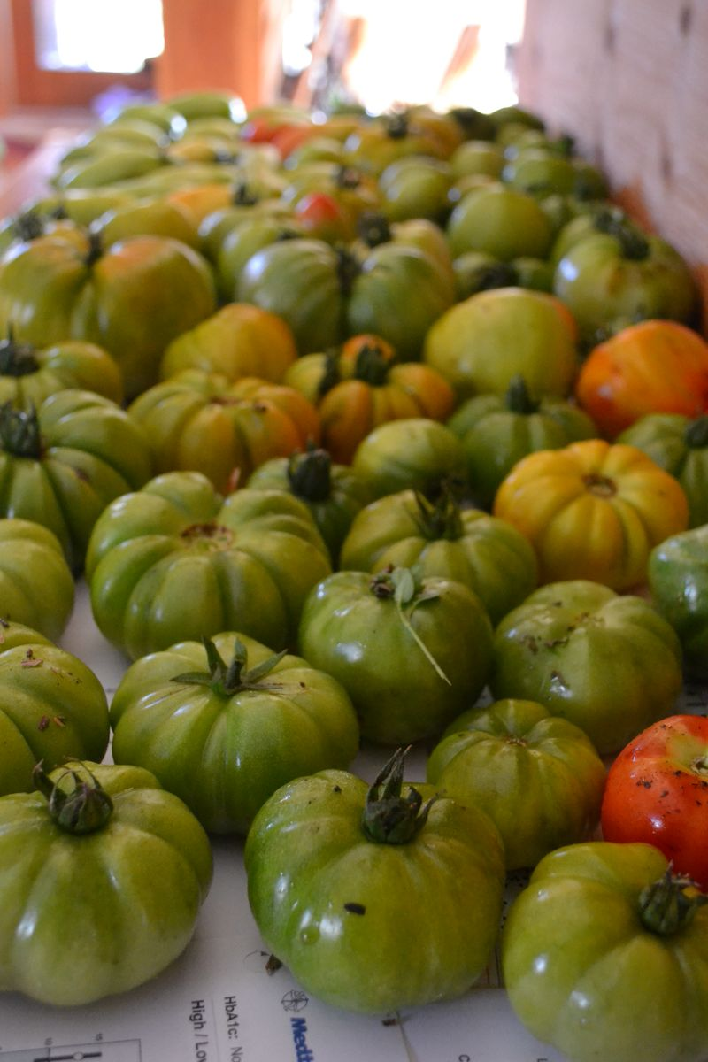 October 2015 - last of the tomatoes