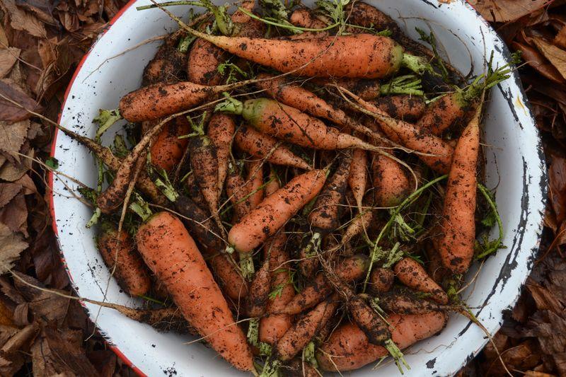 November 2015 - carrots