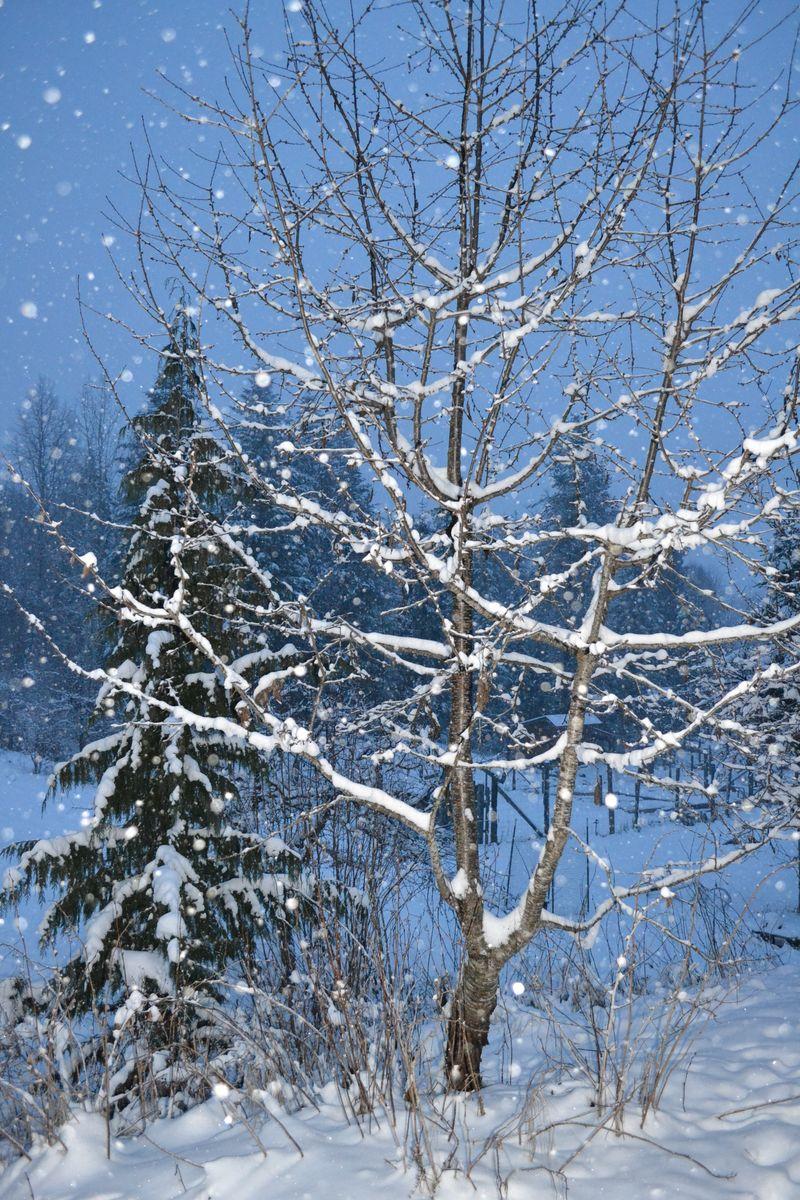 January 2015 - snowing 12