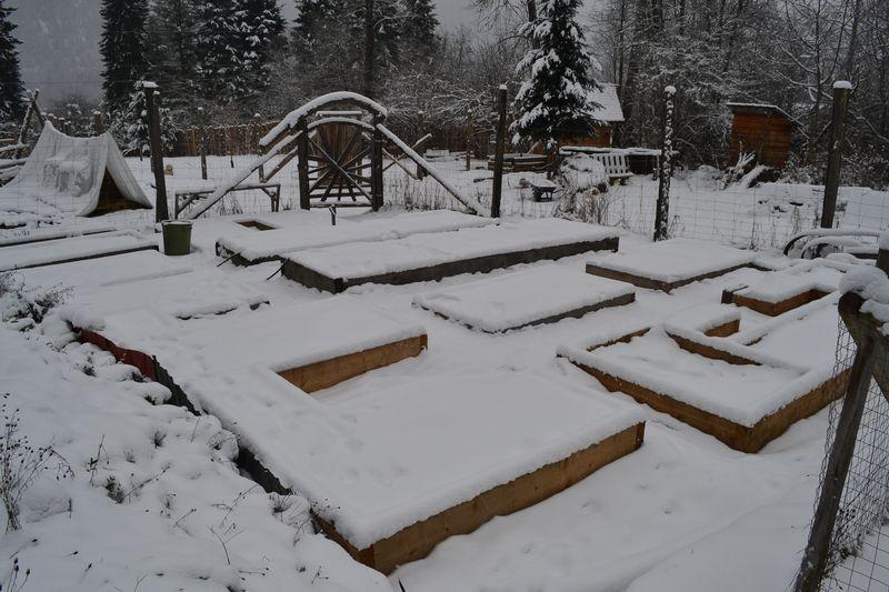 January 4, 2015 - garden