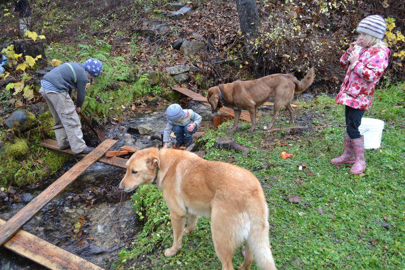 November 2014 - damming the creek 2