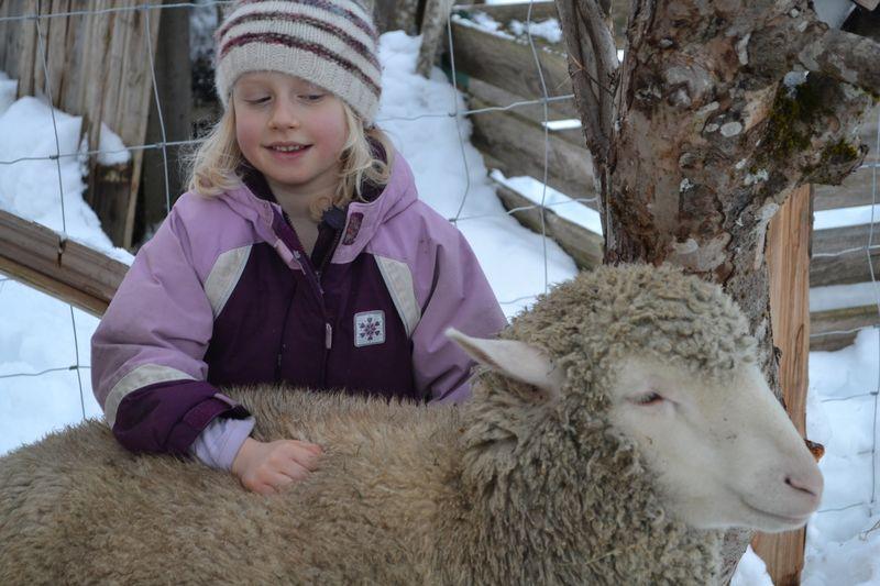 January 2015 - sheep massage