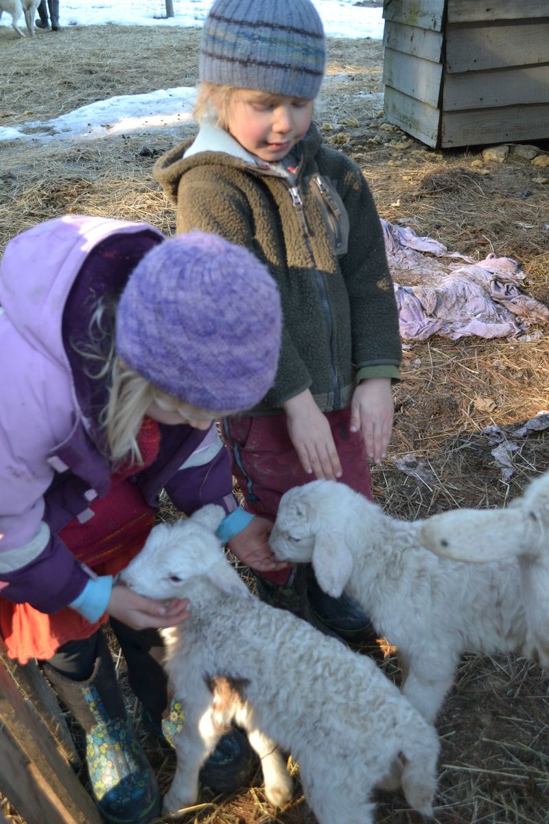February 2015 - John's baby critters 1