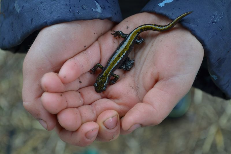 March 2015 - salamander 1