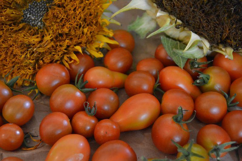 September 24, 2015 - tomatoes 1