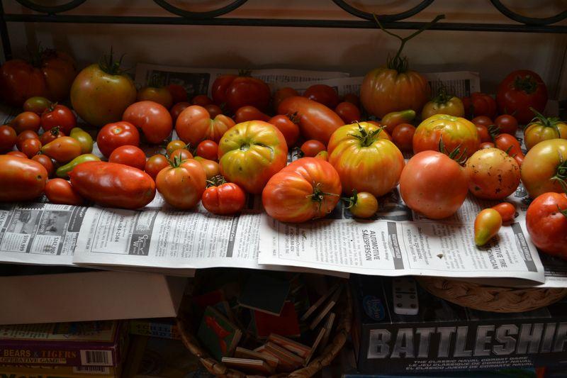 September 24, 2015 - tomatoes 2