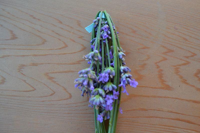 July 2015 - lavender 5