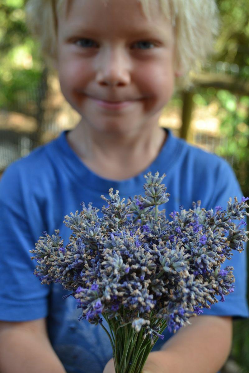 July 2015 - lavender 13